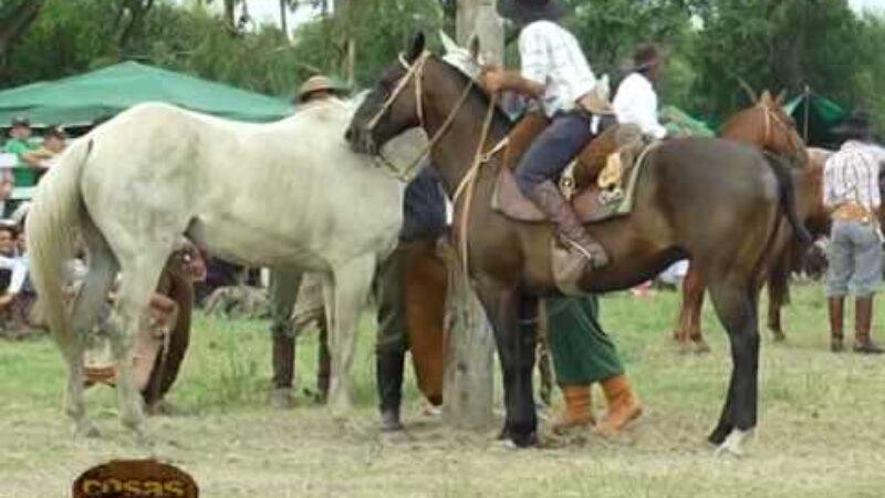 Festival de Recao
